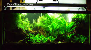 55 gallon aquarium light 75 gallon planted aquarium show tank tank terrors