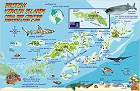 map of the bvi islands dive map coral reef creatures guide
