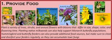 pollinators of native plants diadasia the lives of other bees page 2
