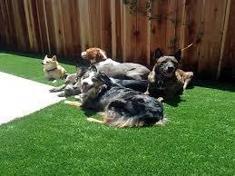 Dog Backyard Playground by Synthetic Grass Cost Bermuda Dunes California Backyard Playground