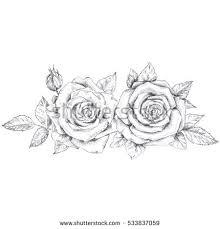 pencil sketch roses stock vector 533837059 shutterstock