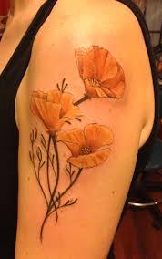 california poppy botanical drawing tattoo scientific illustration