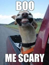 Ermahgerd Animal Memes - ermahgerd wernd weknowmemes generator