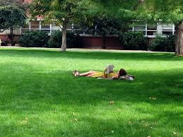 fall lawn care grows healthy spring lawns grow your own nevada