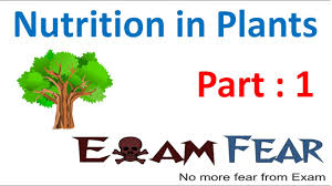 biology nutrition in plants part 1 introduction class 7 vii