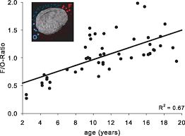 mapping of cortical activity in the first two decades of life a