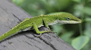 baby lizards