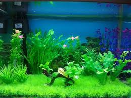 Water plants fish tank decoration sets line Shopping Pet
