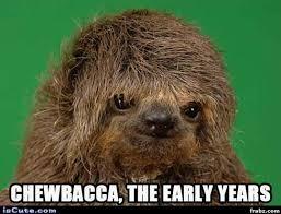 Bane Meme Generator - 51 cat chewbacca costume star wars chewbacca bandana petco