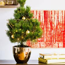 living christmas trees sunset