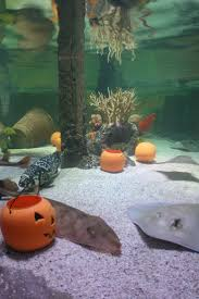 aquarium halloween 14 best happy hallowmarine images on pinterest aquarium ideas