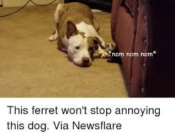 Nom Nom Nom Meme - 25 best memes about nom nom nom nom nom nom memes