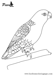 imperial amazon parrot coloring page colouring in