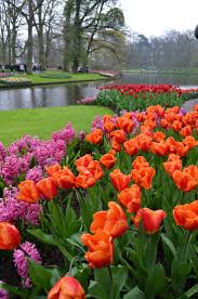 Spring Flower Garden Best 20 Tulips Garden Ideas On Pinterest Spring Flowers