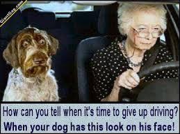 Dog Driving Meme - driving giantgag
