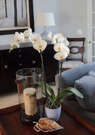 furniture orchid coffee table centerpiece strange 84 best decorating inspiration images on pinterest orchid