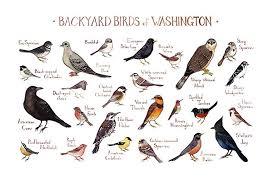 Washington Birds images Backyard birds of washington field guide art print jpg