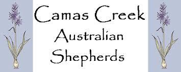 lazy l australian shepherds camascreeklogo4 gif