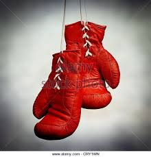 boxer dog in boxing gloves boxer stock photos u0026 boxer stock images alamy