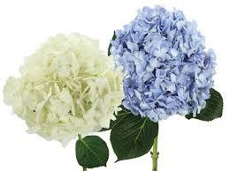 wedding flowers types types of wedding flowers blossom nyc luxury wedding