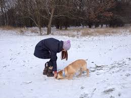 winter walks in magdeburg germany and i a retriever s