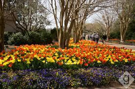 Cheekwood Botanical Garden And Museum Of Art Cheekwood In Bloom Nashville Guru