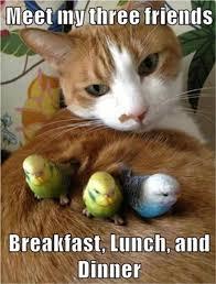 Funny Kitten Memes - cute kitten with birds loldamn com