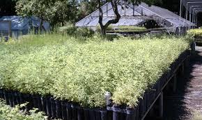 native plant restoration floral native nursery and restoration local nursery crawl