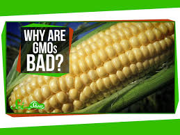 Why Are Gmos Bad Youtube