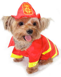Halloween Costumes Yorkies Dogs Firefighter Yorkie Equipped Put Fire Tee Hee
