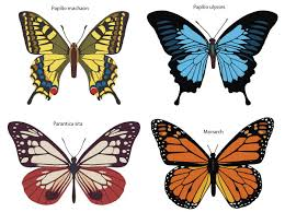 butterfly vector free vector free vectors