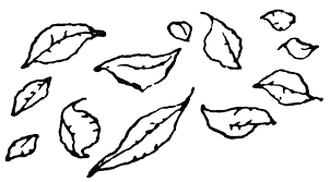 black and white fall leaves clipart clipground