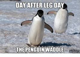 Penguin Memes - 15 down right hilarious penguin memes i can has cheezburger