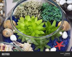 decorative glass vase with succulent plants and seashells glass