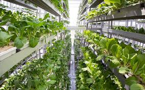 sky greens is the world u0027s first hydraulic driven vertical farm