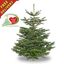 best buy christmas trees in ireland next day delivery available