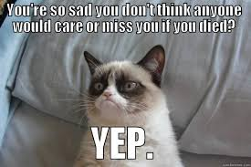 Depressed Cat Meme - grumpy cat memes quickmeme