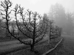 menorah tree of the chanukah tree david werdiger