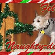 tag for cute christmas picture ideas with dogs happy festivities