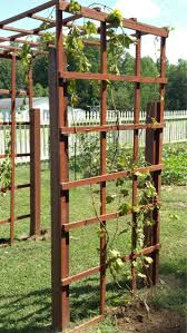 cozy grape vine trellis 13 grape vine trellis design and plans