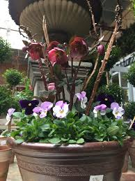 detroit garden works dirt simple part 3