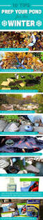 best 25 fish ponds ideas on pinterest outdoor fish ponds small