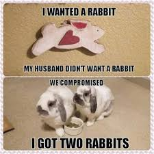 Silly Rabbit Meme - th id oip iacgkom hi7snb2rsfp9bahaha