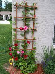 florida gardening ideas florida gardening ideas affordable pixeles with florida gardening