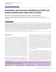 biochemical and molecular identification of lactic acid bacteria