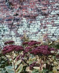 Secret Garden Wall by Things To Do Visit Castle Howard U0027s Secret Garden