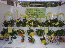 annual flower show 2013 at the empress garden breath of joy