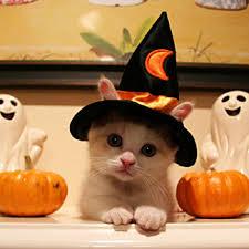 Cat Halloween Costumes Cats 1025 Halloween Dog Costumes Cat Images Food