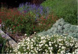garden flowers gallery p 7