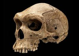 the enigma of the prehistoric skulls with bullet like holes